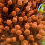 Protect the Coral Reef