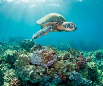 Sunscreen Is Killing Coral Reefs