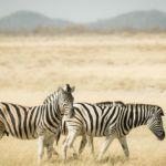 Responsible tourism in Namibia